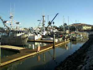 Marina Ships 11-21-2014